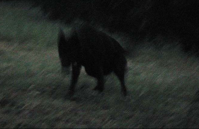 The Black Shuck