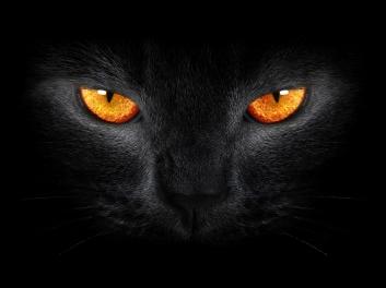 black-cat-2560x1920-scary-yellow-eyes-dark-background-945